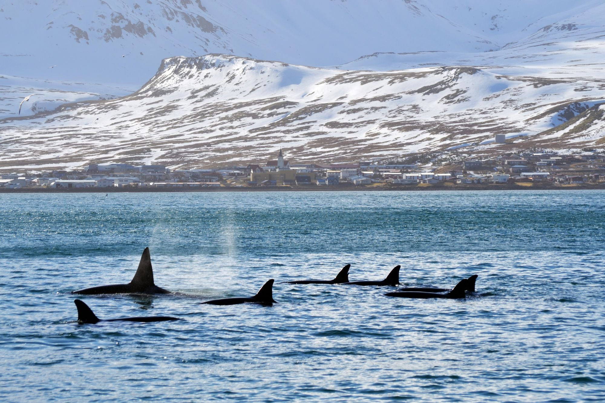 Whale Watching Visit West Iceland