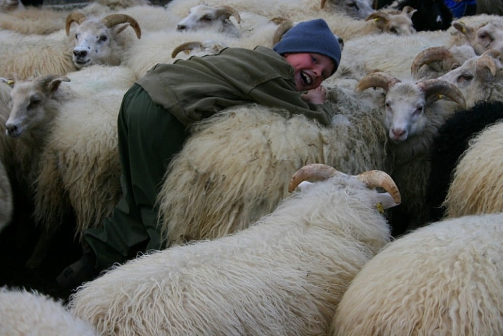 Sheep Round-Up in West Iceland 2016